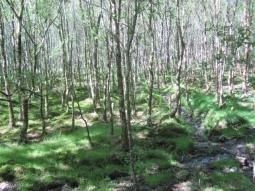 Woods of Glendalough in the Wicklow Mountains, Ireland, June 2013