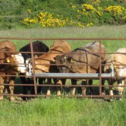 Pasture near Athy, Ireland, June 2013