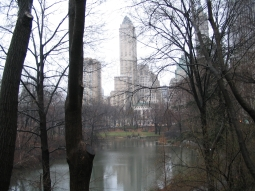 Foggy day in Central Park, NYC